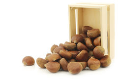 Chestnuts  in a wooden box Stock Photos