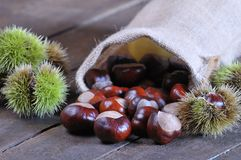 Chestnuts. Stock Photography