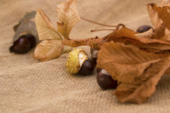 Chestnuts and yellow autumn leaves Royalty Free Stock Photography