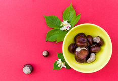 Chestnuts in yellow bowl with leaves and flowers on red backgrou Royalty Free Stock Photography