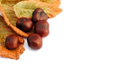 Chestnuts and yellow leaves, autumn items. On white background, soft shadows Stock Photos