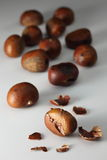 Chestsnut07 Immagine Stock