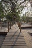 Cheung Ek Killing Field - Phnom Penh Imagen de archivo