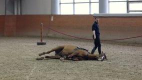 Cheval à fixer Demandant à un cheval de se coucher en montant Fixation du cheval Aucune cordes Équitation normale banque de vidéos