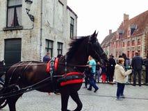 Cheval à Gand Photographie stock libre de droits
