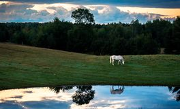 Cheval à la réflexion de lever de soleil en ciel bleu d'étang images stock