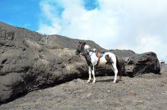 Cheval à louer près du bâti Bromo dans Java-Orientale, photos stock