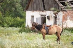 Cheval à une écurie dans le village Photo stock