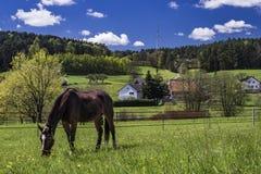 Cheval à une belle ferme bavaroise allemande de campagne Photos libres de droits