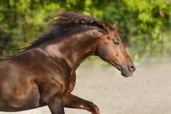 Cheval élevé en plein air Photo stock