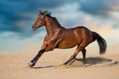 Cheval élevé en plein air Photographie stock libre de droits