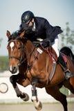 Cheval équestre Rider Jumping Décrivez montrer un concurrent exécutant en concurrence de sauter d'exposition photo libre de droits