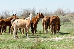 cheval, équin, canasson, hoss, entaille, cheval de trait images libres de droits