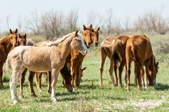 cheval, équin, canasson, hoss, entaille, cheval de trait images stock
