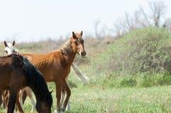 cheval, équin, canasson, hoss, entaille, cheval de trait image stock