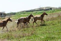 cheval, équin, canasson, hoss, entaille, cheval de trait photo stock