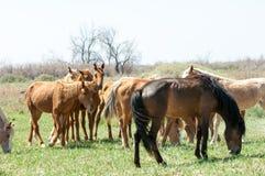 cheval, équin, canasson, hoss, entaille, cheval de trait image libre de droits