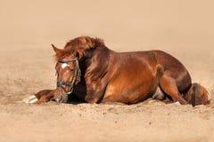 Cheval étendu sur le sable Image stock