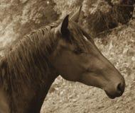 Cheval Image stock