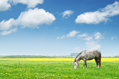Cheval Photo stock