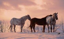 Cheval Photographie stock