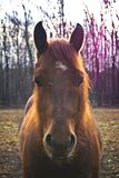 Cheval Photos stock