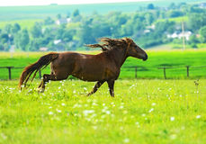 Cheval Photo stock