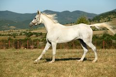 Cheval Image stock