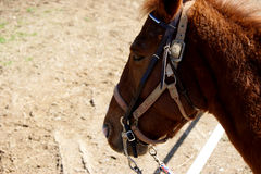 Cheval Photos stock