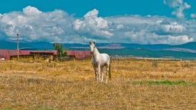 Cheval Photographie stock libre de droits