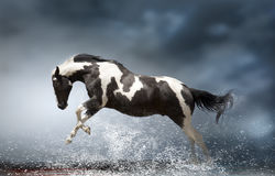 Cheval Images stock
