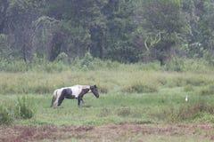 Cheval Image libre de droits