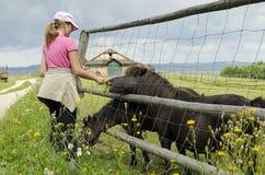 Cheval alimentant de fille photos libres de droits