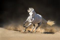 Cheval andalou blanc Images libres de droits