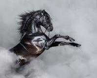 Cheval andalou noir s'élevant dans la fumée images stock
