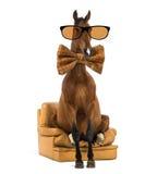 Cheval andalou se reposant sur un fauteuil photographie stock libre de droits