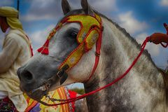Cheval Royalty Free Stock Image