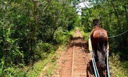 Cheval après des pistes de forêt Image libre de droits