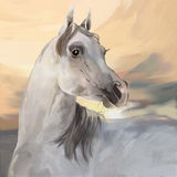 Cheval Arabe gris illustration de vecteur
