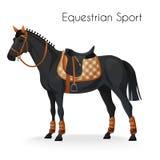 Cheval avec l'équipement de sport équestre Photo libre de droits