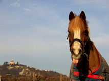 Cheval avec l'expression drôle et un château à l'arrière-plan photographie stock
