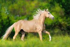 Cheval avec la crinière blonde images libres de droits