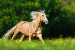 Cheval avec la crinière blonde photographie stock