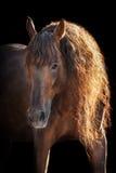 Cheval avec la longue crinière sur le noir photo stock