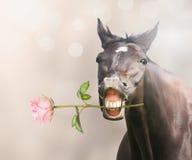 Cheval avec la rose de rose dans la bouche sur le fond de bokeh Image stock
