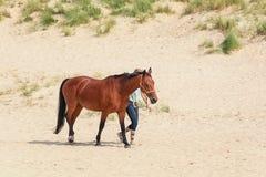 Cheval avec le cavalier sur la plage de Texel de la Mer du Nord Photographie stock