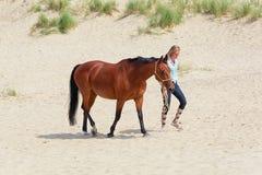 Cheval avec le cavalier sur la plage de Texel de la Mer du Nord Images libres de droits