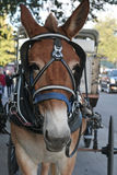 Cheval avec le chariot à la Nouvelle-Orléans. photo stock