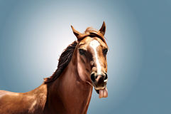 Cheval avec le toung collant  Photographie stock libre de droits