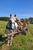 Cheval avec les balles de foin chargées par chariot Image libre de droits